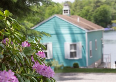 Cottage exteriors and purple rhododendrons.